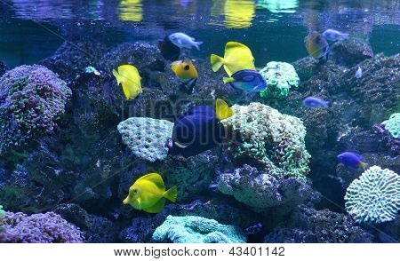 colorful exotic fish on a coral reef poster