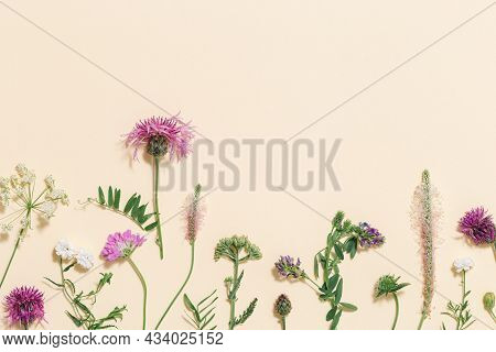 Varied Forest Grass And Meadow Flowers As Stylish Botanical Background Pastel Colored. Flat Lay Patt