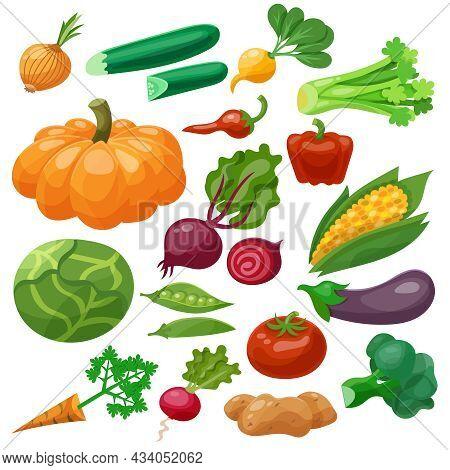 Vegetables Icons Set With Cauliflower Maize Cabbage Radish Isolated Vector Illustration