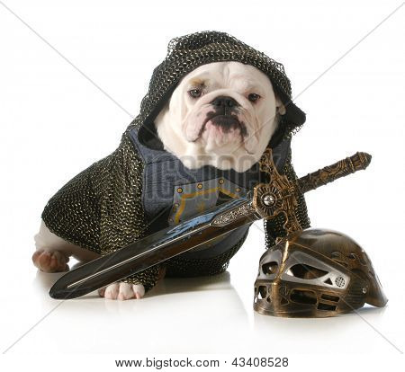 dog dressed up as a knight isolated on white background - english bulldog