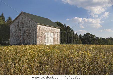 Old Barn In Soybean Field