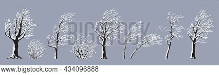 Set Of Snow Covered Young And Old Trees And Bushes Without Leaves Isolated On Gray. Winter Season, H