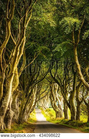 A Corridor Of Trees At Dark Hedges With A Pathway Leading Through, During Summertime