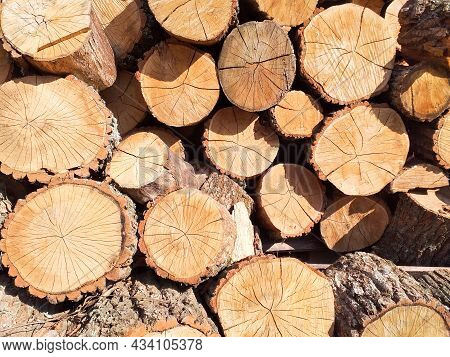 Cross Section Of Tree Trunks Background. Cutting Tree Trunks For Interior Decoration, Background. Pr