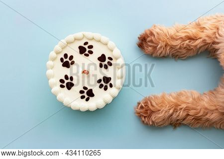 Dog with paw print birthday cake and birthday candle