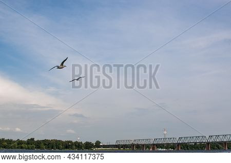 Two Seagulls Fly Against The Blue Sky In The Evening. Seabirds Soar Gracefully In The Air Above The