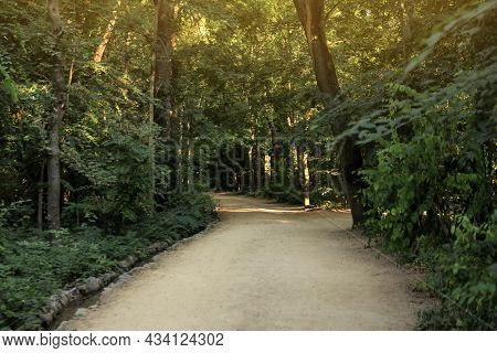Pathway In Park With Green Trees. Nature Reserve