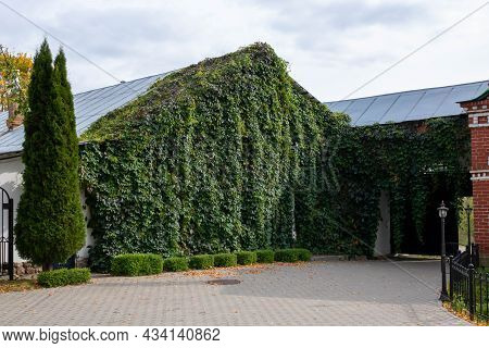 A Climbing Vine On The Facade Of A House Covered With Vertical Plants Of Wild Grapes Or A Green Eco-