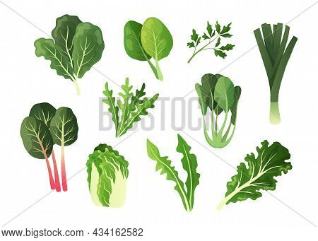 Green Salad Vegetables. Cartoon Food Leaves. Organic Lettuce And Watercress. Isolated Chard Or Spina