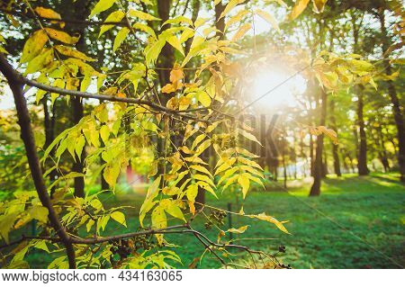Sun Shining With Flare Through The Brunch With Green Yellow Orange Autumn Leaves And Berries. New Le