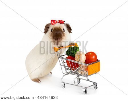 Cute Guinea Pig Carries Shopping Cart Full Of Vegetables Isolated On A White Background