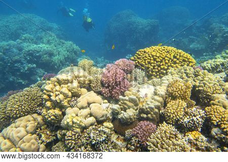 Colorful, Picturesque Coral Reef At The Bottom Of Tropical Sea, Different Types Of Hard Coral, Under