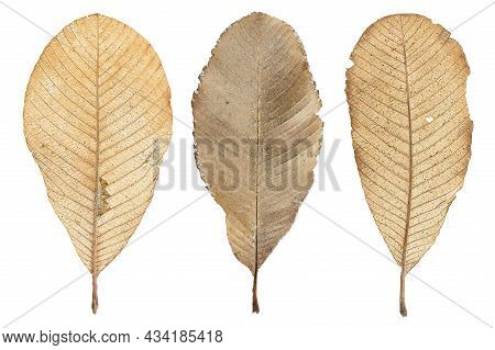 Dirty Grunge Dry Leaves On White Background With Clipping Path
