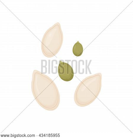 Pumpkin Seeds. Vegetable Seeds Isolated On White Background.