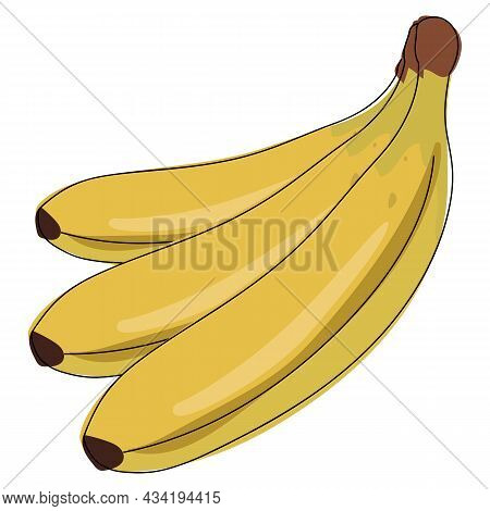 Vector Banana. Bunches Of Fresh Banana Fruits Isolated On White Background
