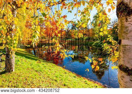 Birch Leaves In Autumn In Alexander Park, Pushkin (tsarskoe Selo), Saint Petersburg, Russia