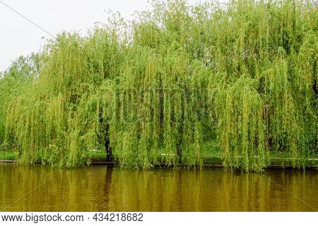 Landscape With Water And Green Weeping Willow Trees On The Shoreline Of Titan Lake In Alexandru Ioan