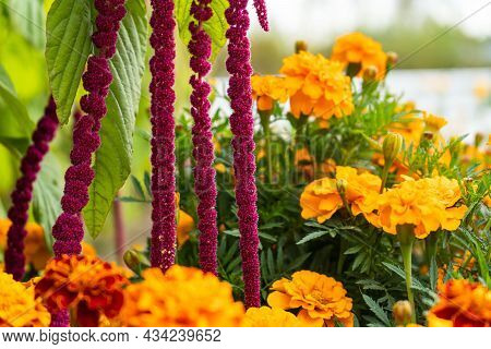 Summer Flowers Are Blooming In The Garden. Flowers Of Different Colors