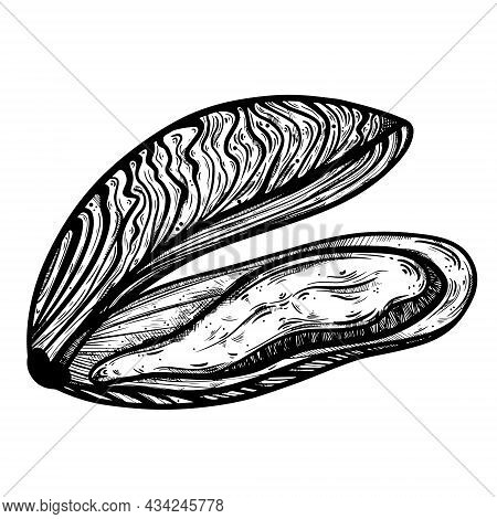 Mussel Vector Icon. Hand-drawn Doodle. Ink Sketch. A Seafood Delicacy In An Open Shell. Silhouette O