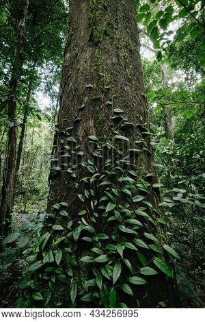 Tranquil Scenic Of Nature Tree In The Tropical Forest, Natural Landscape Scenery View Of Jungle Tree