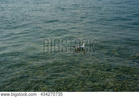 Seagull Floating In The Waters Of The Straits Of Mackinaw