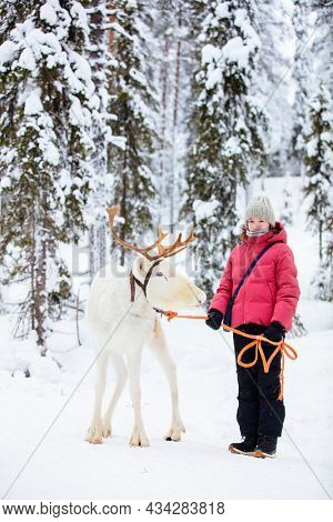 Adorable pre-teen girl walking with white reindeer in winter forest in Lapland Finland