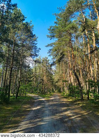 Scenic Forest With Tall Trees, Lush Foliage And Two Paths On A Blue Sky Background. Nature Is Beauti