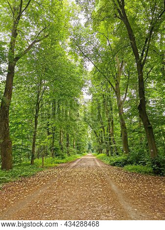 Scenic Forest With Tall Trees, Lush Foliage And Yellow Leaves On A  Pathway. Beautiful Autumn Nature