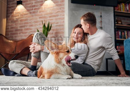 Adorable Corgi Lying On The Floor And Sticking Out Tongue While Beautiful Young Couple Cuddling. Hap