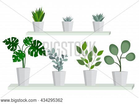 Indoor Plants In A Pot. Botanical Flowers For Interior Decoration. Home Decorations. Set Of Simple I