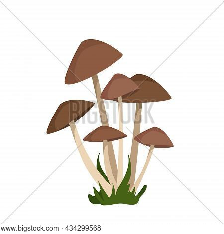 Toadstool Mushrooms With Brown Caps On Thin White Legs Grow In Bunches Among The Grass