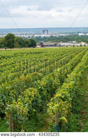 View On Green Vineyards Of Famous Champagne Houses In Reims, France