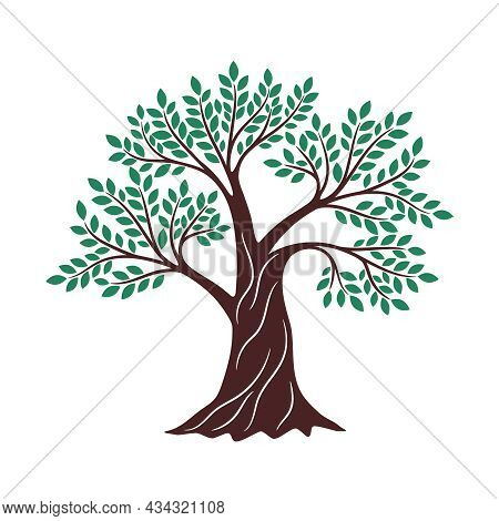 Tree Green Drawing. Oak Graphics, Environment Religious Creative Knowledge Logo Branding Element, Ge