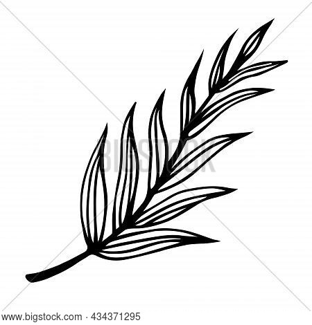 Branch With Striped Leaves Vector Icon. Hand-drawn Doodle. A Twig With Veined Leaves. Botanical Sket