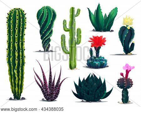 Mexican Cactuses, Cartoon Prickly Succulent Plants With Flowers And Blossoms. Vector Set Of Desert C