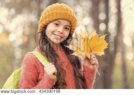 Beautiful Child With Long Hair Hold Yellow Fallen Maple Leaves Wearing Knitted Hat And Warm Sweater