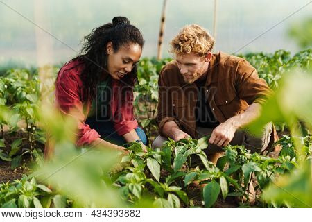 Happy middle aged multiethnic couple of farmers working in a greenhouse together planting