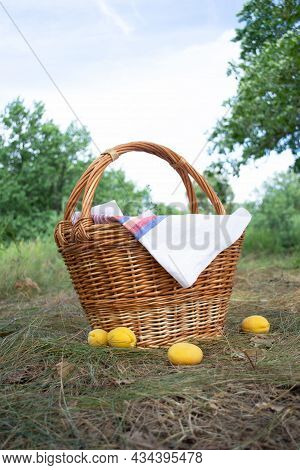 Summer Picnic Basket On The Grass In The Forest. Basket With Apricots Close-up. Camping Rest