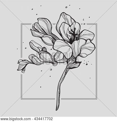 Fressia Flowers Tattoo For Woman. Art Illustration. Vector Drawing. Hand-draw Tattoo