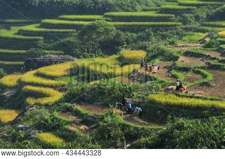 Sa Pa, Vietnam - Oct 3, 2013. Terraced Rice Field In Sapa, Vietnam. Sapa Terraced Fields Are One Of