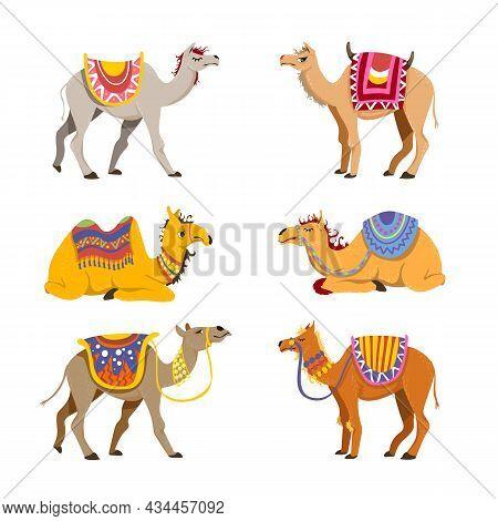 Camel Set For Desert Caravan. Cartoon Vector Illustrations. Group Of Cute Bactrian And Dromedary Cam