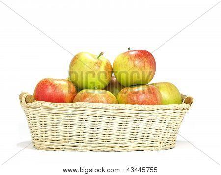 Elstar Variety Apples