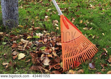 Rake With Fallen Leaves In Autumn. Gardening In The Fall Season, A Bunch Of Leaves. Cleaning The Law