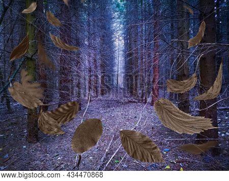 Mystical Dark Magic Fall Forest. Awesome Sunny Wild Area
