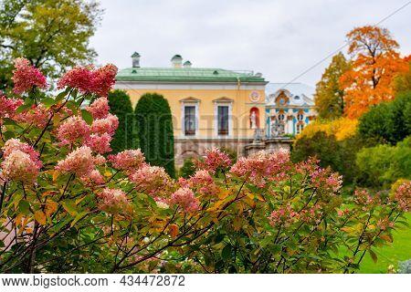 Flowers In Catherine Park, Tsarskoe Selo (pushkin), Saint Petersburg, Russia