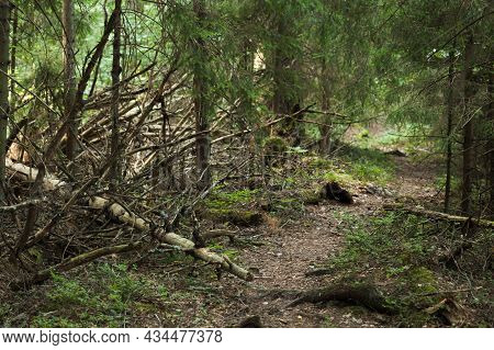 Empty Dark Pathway In Coniferous Forest. Karelia, Russia
