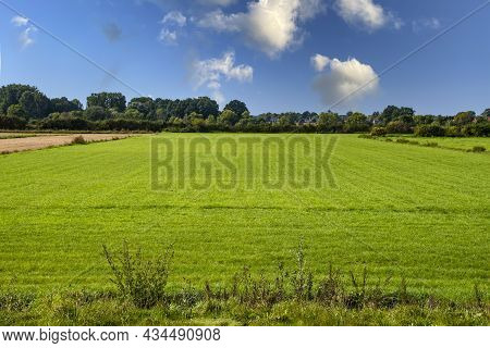 Highly Cultivated Agricultural Grassland Under A Blue Sky With Fluffy Clouds
