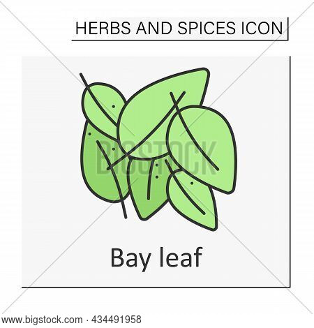 Bay Leaf Color Icon. Aromatic Dried Leaf For Food Preparation. Strong-smelling Seasoning. Herbs And