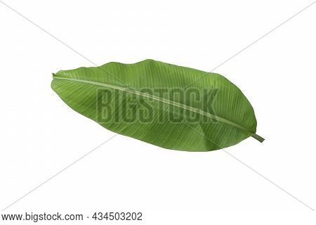 Banana Leaf Isolated On White Background. Object With Clipping Path.