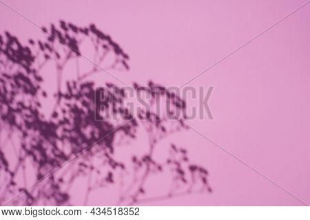 Trending Concept In Natural Materials With Plant Shadow On Pink Background. Presentation With Daylig